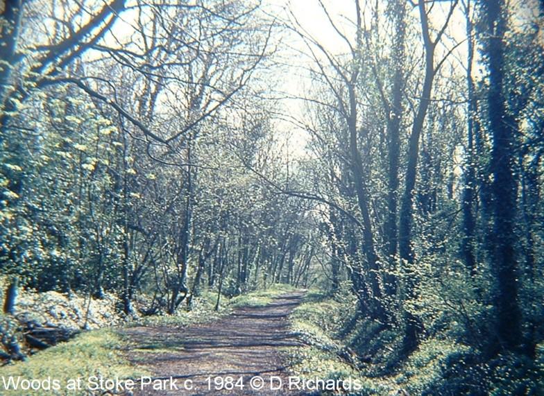 Stoke_woods_D_Richards_2-800